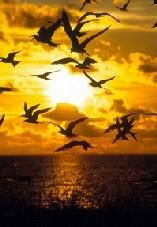 Oda a la alegría (fragmento) - Friedrich Von Shiller