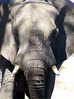 Elefante encadenado - Jorge Bucay